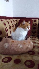 Изработка на легло (вълнена къщичка) за котка или куче. Филц работилница.