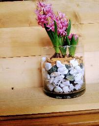 Декоративни стъкленици с живи цветя