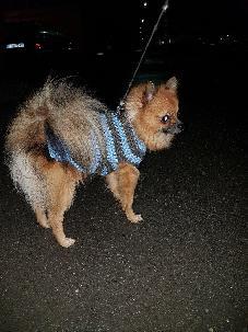 Дрехи за куче ръчна изработка. Плетени дрехи за кучета. Дрехи за куче.