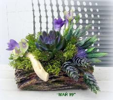 Сукулентни растения в циментова кашпа
